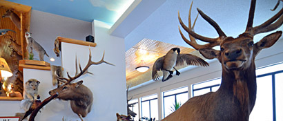 Taxidermy Display